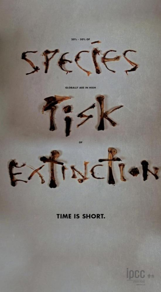 species-risk-extinction-563x1024