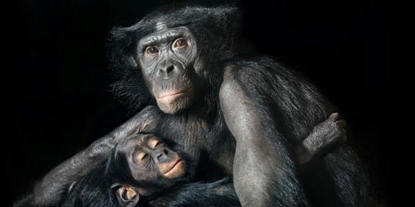 more-than-human-animal-photography-tim-flach-15