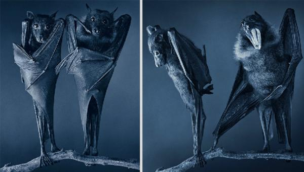 more-than-human-animal-photography-tim-flach-19