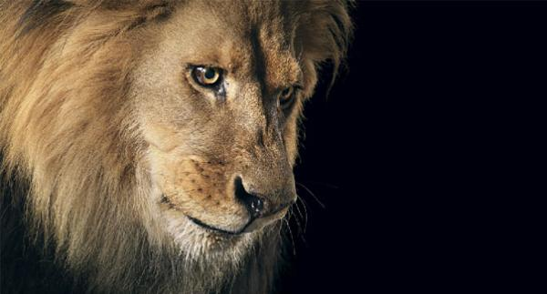 more-than-human-animal-photography-tim-flach-26