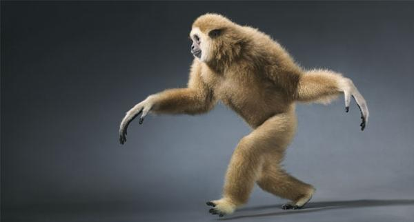 more-than-human-animal-photography-tim-flach-29