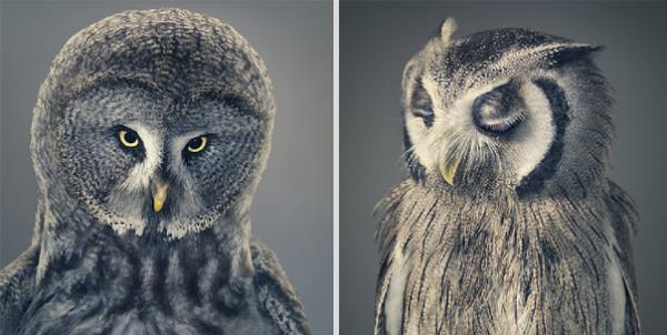 more-than-human-animal-photography-tim-flach-4
