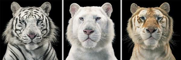 more-than-human-animal-photography-tim-flach-6
