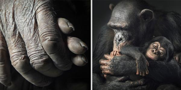 more-than-human-animal-photography-tim-flach-8