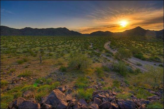 desert5_thumb
