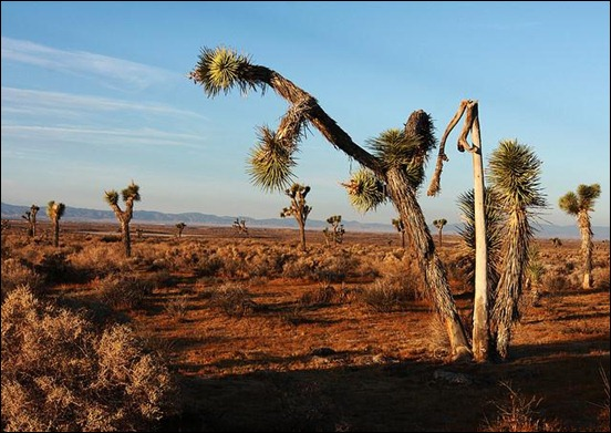 mojave-national-preserve_thumb